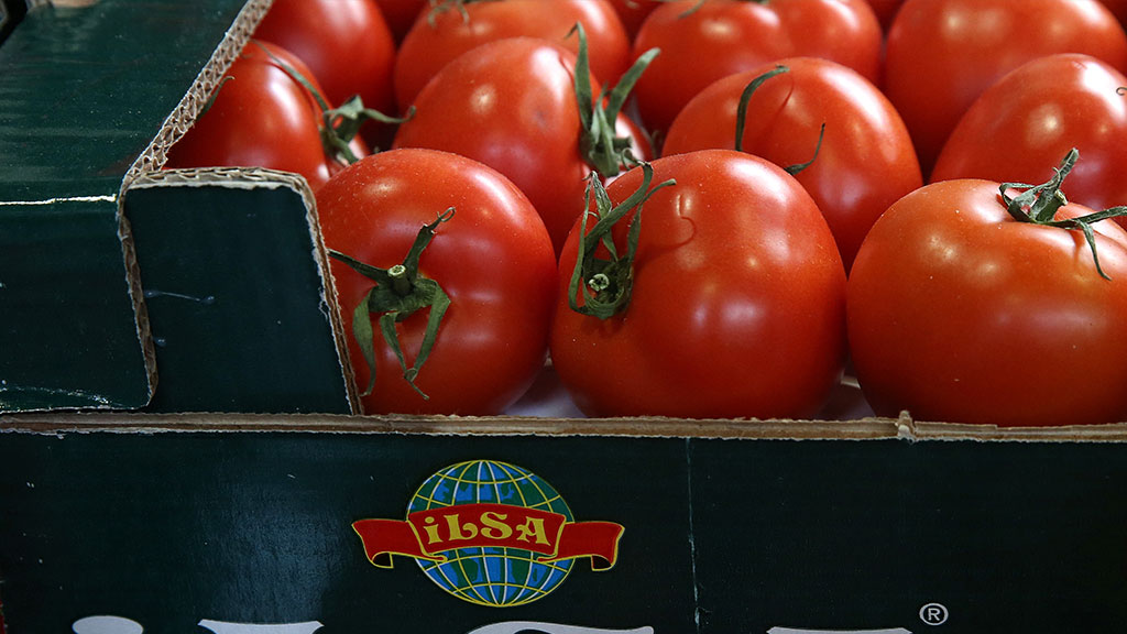 pomido vs tomato