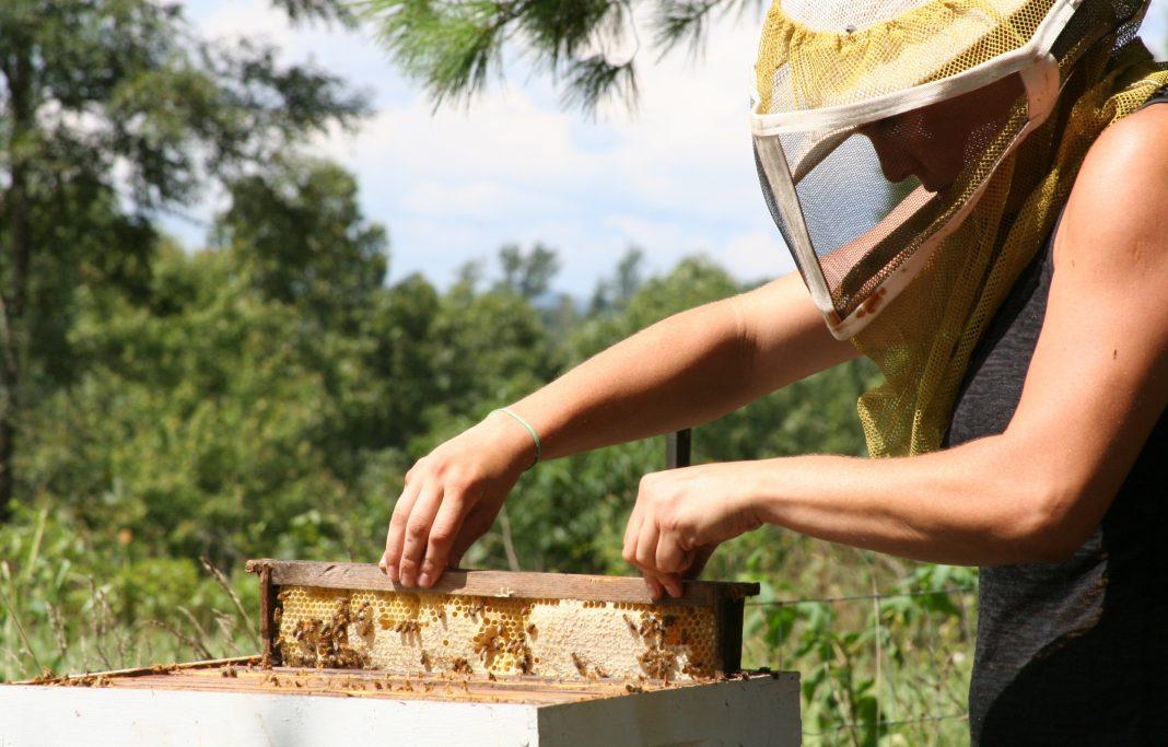 honey bee bal arisi