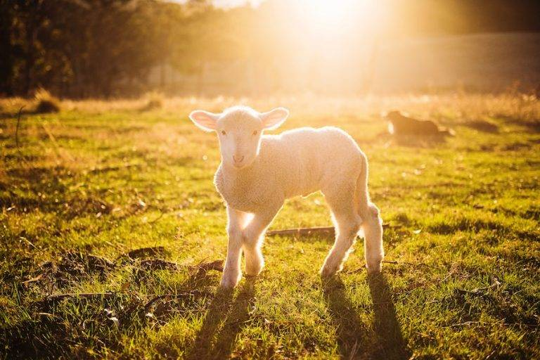 Agriculture Farm Insurance 768x512 1