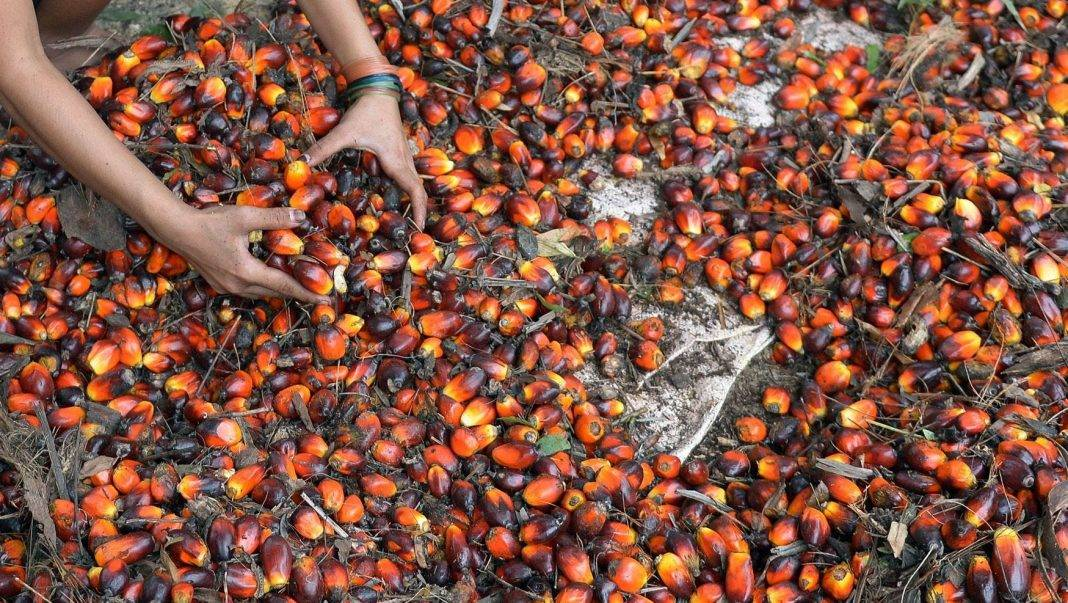 feature palm oil africa